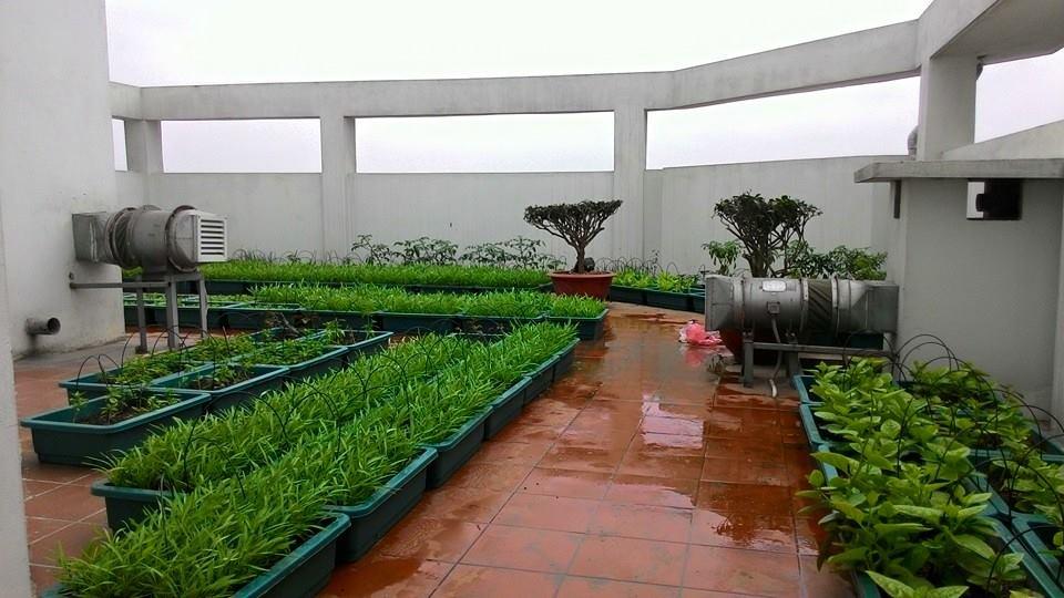 2meo xu ly chong tham tren san thuong 1 phunutodayvn 0042 phunutoday - Hướng dẫn mẹo xử lý chống thấm trên sân thượng trồng nhiều cây xanh
